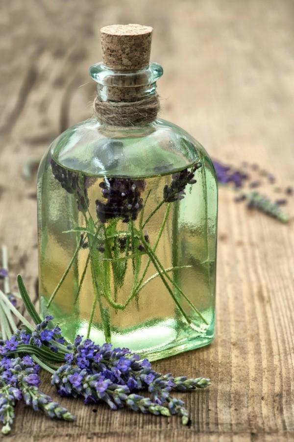 Lavender Flowers In Oil