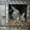 Homemade Rabbit Cage