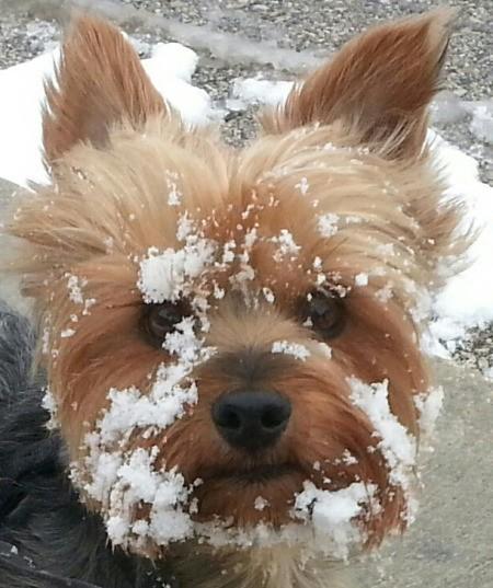 Riley (Dog)