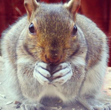 My Fat Stalker Squirrel