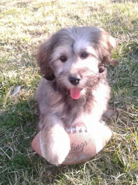 Dog with a football.