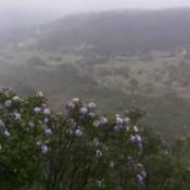 Scenic View (Vanderpool, TX)