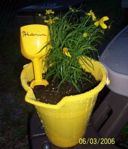 Planted yellow pail.