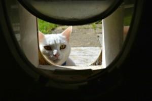 Cat Looking in Flap