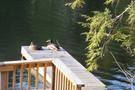 Wildlife: Ducks
