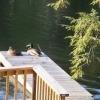 Ducks on a fishing pier.