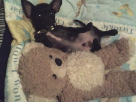 DJ and his favorite toy when he was younger