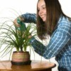 A girl watering a house plant.