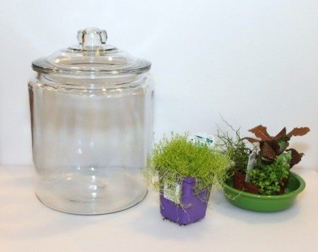 terrarium jar and plants