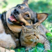 Dog and Cat Together