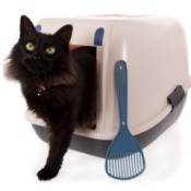 Cat exiting a litter box.