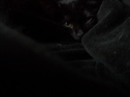 Asa (Black Kitten) in a black blanket