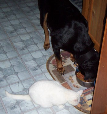 Elsa and Cleo (Rottweiler and Cat)