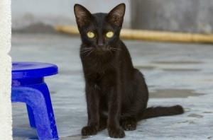 A kitten sitting on a concrete floor.