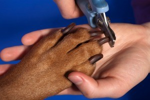 Dog with Long Nails Getting them Trimmed