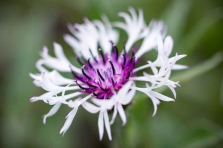 Garden Photo Contest