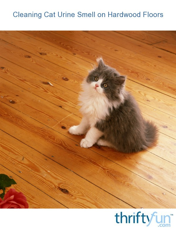 Cleaning Cat Urine Smell On Hardwood Floors