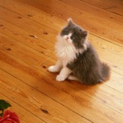 A kitten sitting on a wood floor.