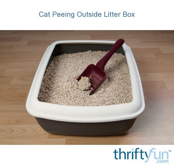 Cat Peeing Outside Litter Box