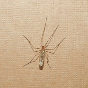 Insect on Inside Wall