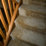 Carpeted stairs damaged by flooding.