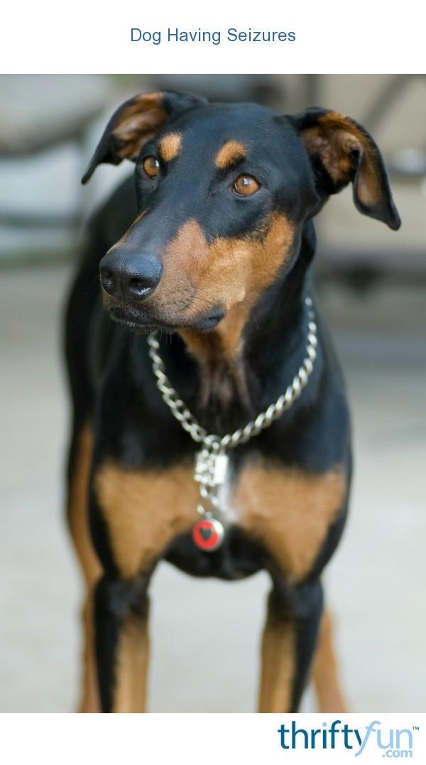 Dog Having Seizures | ThriftyFun