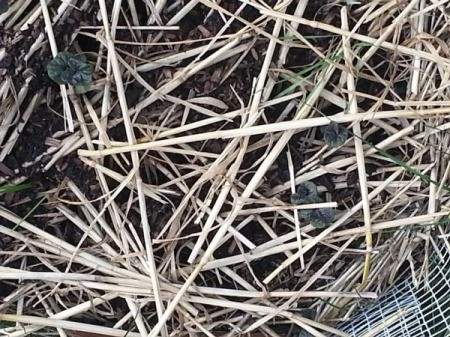 layer of straw like mulch on top of soil