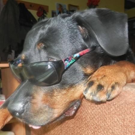 Brookie in sunglasses