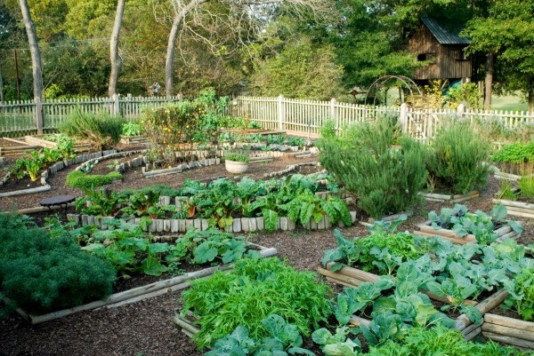 How Air Pollution Affects Your Garden