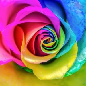 tissue paper rainbow rose