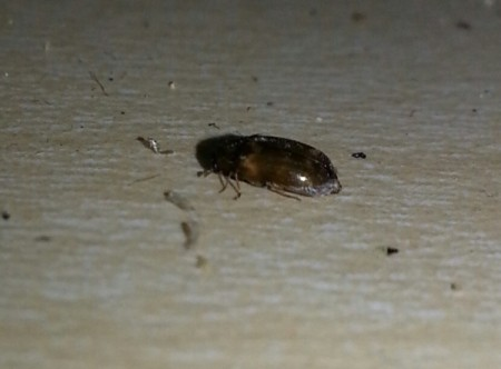 An unknown bug in the kitchen.