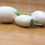 Three white eggplants from an Easter Egg plant.