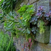 succulents growing in stone wall