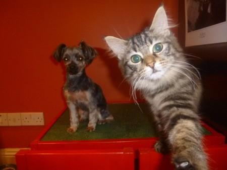 next to puppy