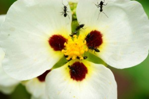 ants on a flower