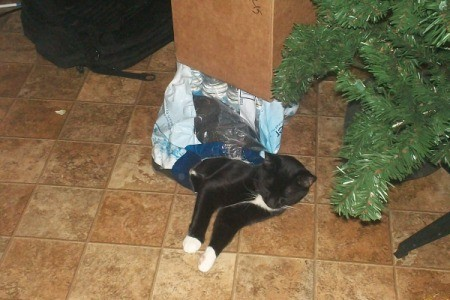 tuxedo cat in plastic bag on the floor