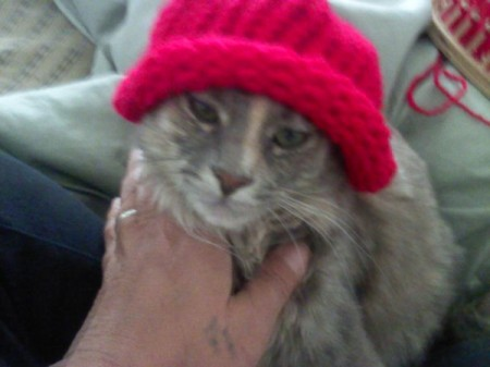 kitty with red beanie on