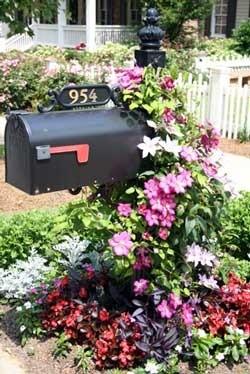 flowering vines on mailbox