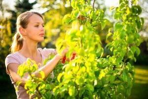 Woman Gardening in Summertime
