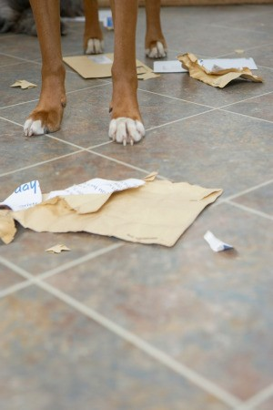 Dog Ripping Paper