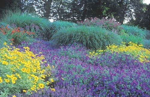 Perennial Plants Of The Year Thriftyfun