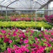 A nursery full of beautiful plants.