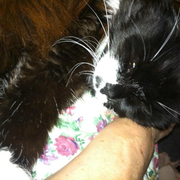 black cat with white chin