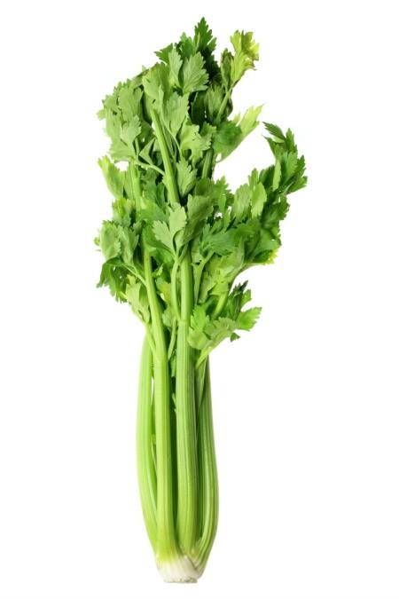 Limp Celery
