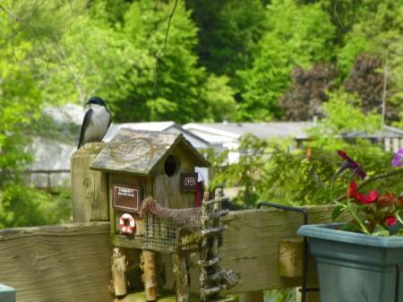 New Tenants in the Birdhouse