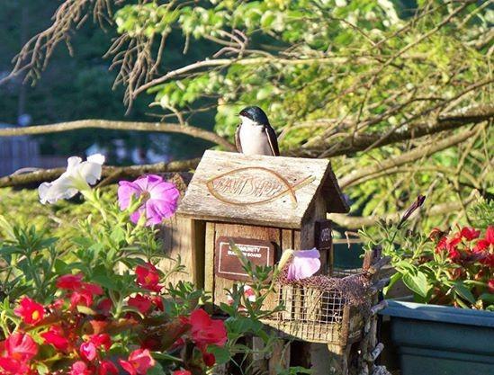 Mantenimiento de casas de aves