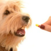 Dog Calcium Supplement