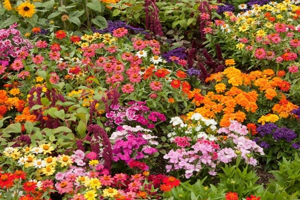 Choosing Blooms And Foliage From The Garden Can Create A Colorful, Unique  Arrangement Of Flowers. This Is A Guide About Making A Garden Flower  Bouquet.