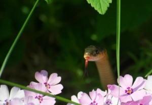 A Snake In My Garden