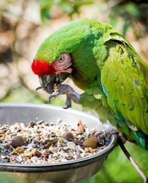 Pet Bird Seed